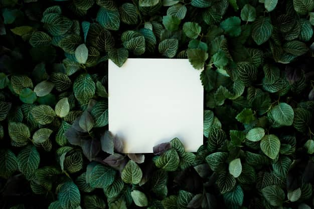 Evergreen-content-panzi-digital-agency